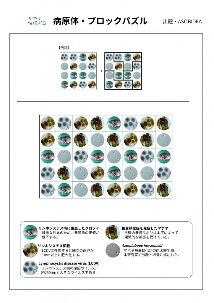 sakanaQ_3-jpg